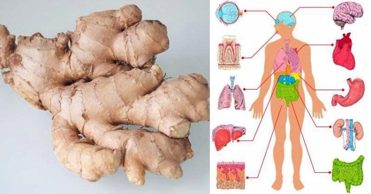 Против грибков и токсинов: целительные свойства имбиря, которые известны не каждому