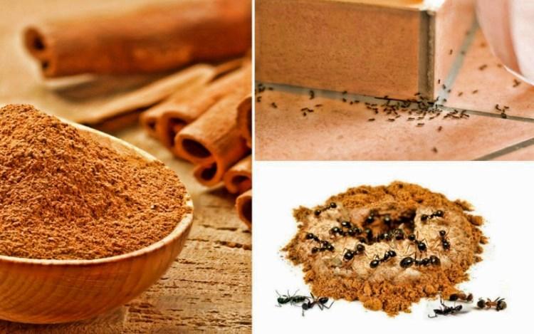 Обычная корица поможет навсегда забыть о муравьях в вашем доме