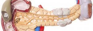 Симптомы панкреатита - почему и как болеет поджелудочная железа