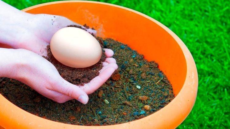 Зачем люди закапывают яйца: яичная скорлупа как лучшее органическое удобрение