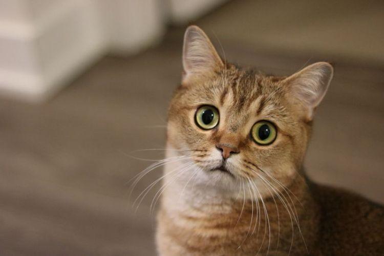 Кастрация кота. Особенности выбора клиники и преимущества процедуры