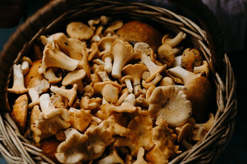 Поджелудочная железа и холестерин