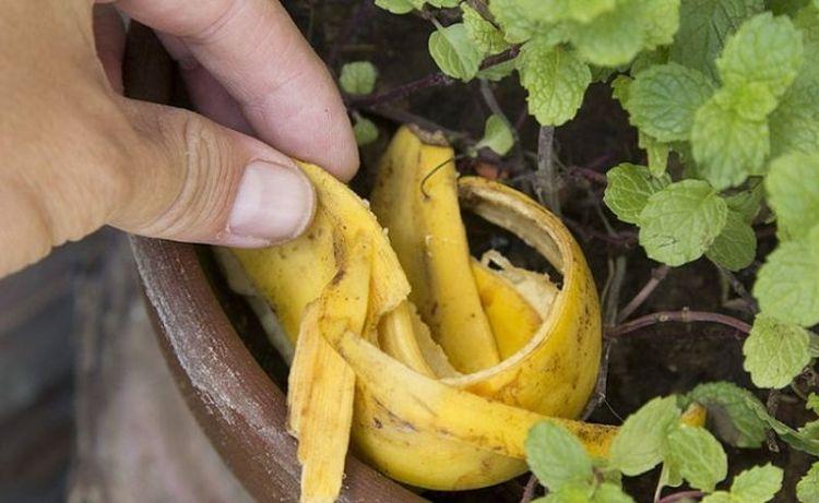 Кожура банана для оригинальной сладости на огне