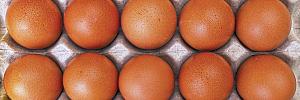 В некоторых продуктах при низкой калорийности содержится не одна суточная норма потребления ценных веществ. Еще в них есть жирные кислоты, питательные вещества и биологически активные соединения с целебными свойствами.