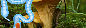 8 целебных грибов, обладающих мощным противораковым эффектом
