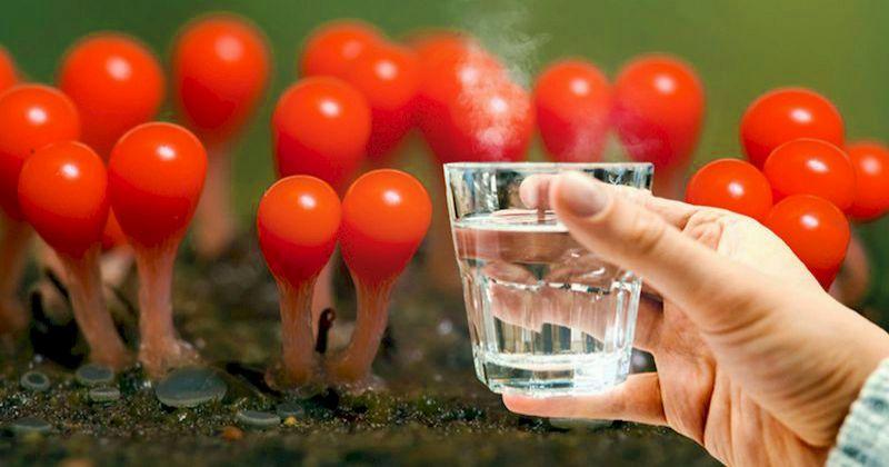 Как правильно пить воду чтобы получить от нее максимум пользы