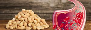 Арахис для сердца, против инсульта и рака: 13 научно доказанных фактов о пользе арахиса