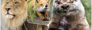 Лев, лиса или выдра: психологический тест определит, кто ваш двойник в мире животных