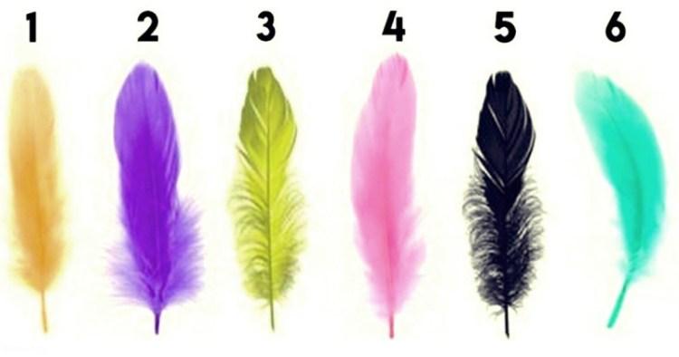 Случайно выбрав перо, можно узнать самые сильные черты своего характера
