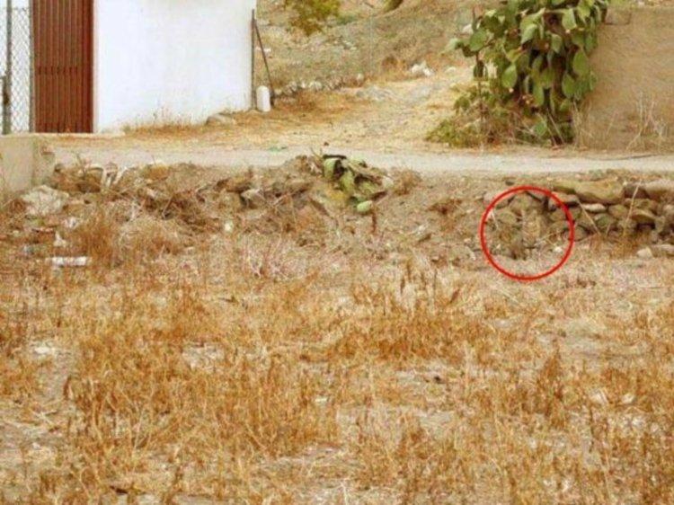 Где спрятался кот: лишь 5% людей могут найти его без подсказки