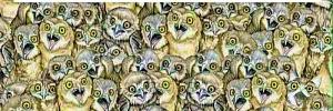 Проверьте свою внимательность: найдите на картинке спрятанных животных