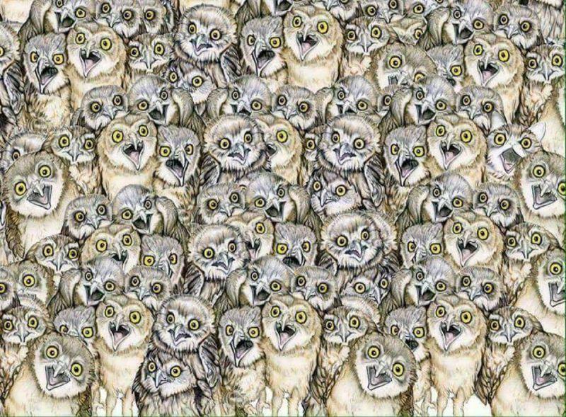 внимательность кот на картинке