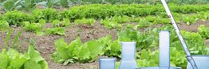 Нитраты в овощах и как избавиться от химической опасности