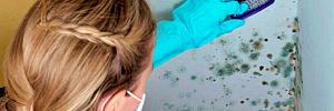 5 средств, которые позволят быстро избавиться от плесени