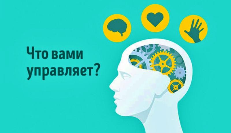 Сердце, руки или мозг: тест на мышление определит, что вами управляет