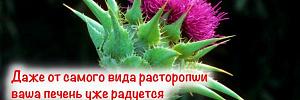 С виду сорняк, но внутри спасение для вашей печени: расторопша и ее полезные свойства