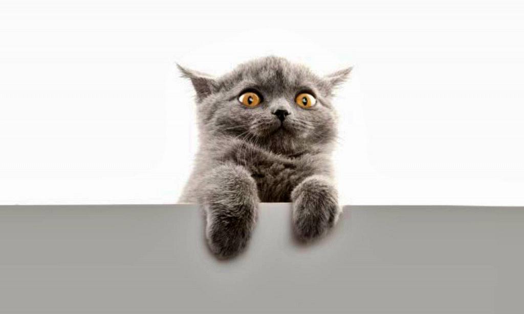 Ученые обнаружили, что любимые домашние кошки могут вызывать опасное психическое расстройство