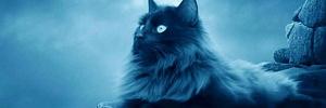 Почему не мы выбираем кошек, а они нас: что говорит астрология