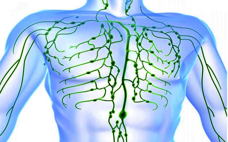 Лимфатическая система: 10 советов для улучшения лимфодренажа ради вечной молодости
