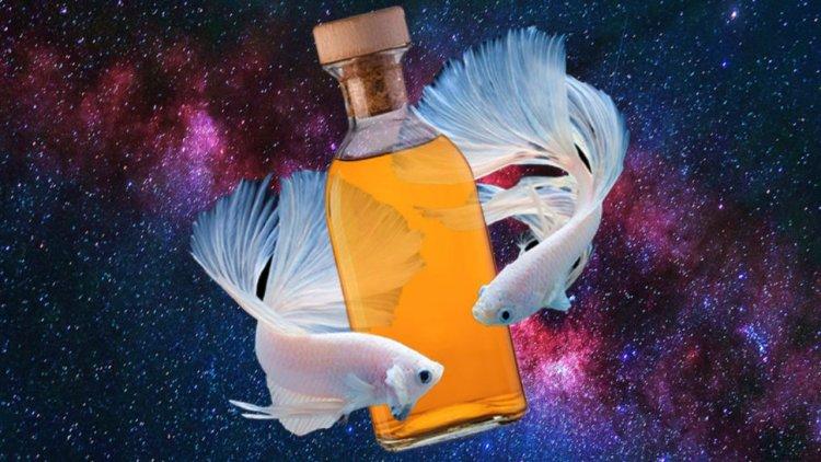 Алкогольный гороскоп поведает, как напиваются разные знаки Зодиака