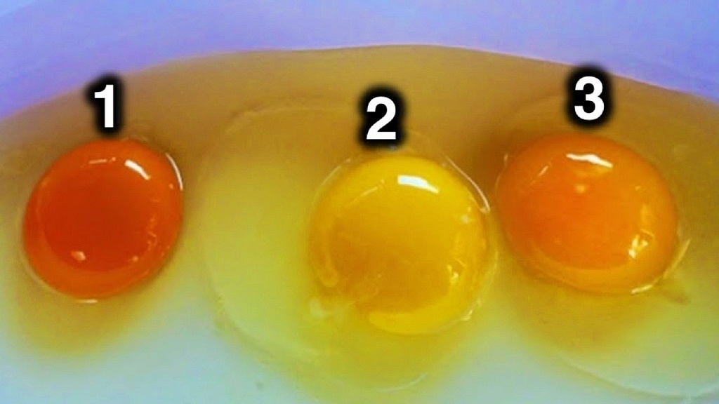 Цвет яичного желтка может многое рассказать о здоровье курицы