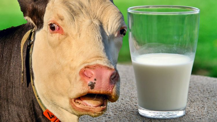 Жирность молока и молодость: ученые доказали, что лишь один сорт молока борется со старостью