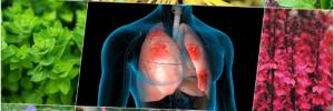 На зло астме, мокроте и грязному воздуху: 8 лучших лекарственных растений для здоровья легких и крепости дыхательной системы