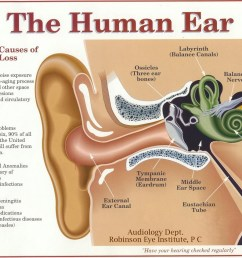 the most important part of any sound system your ears and brain black ear diagram plugged ear diagram [ 1099 x 845 Pixel ]