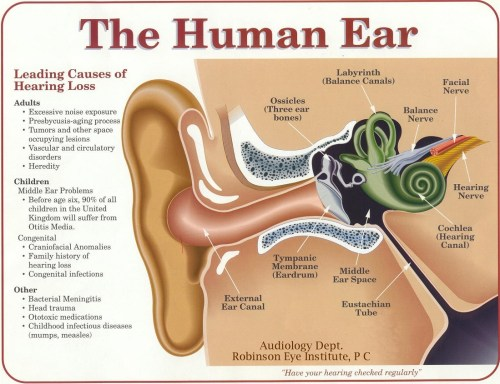small resolution of the most important part of any sound system your ears and brain black ear diagram plugged ear diagram