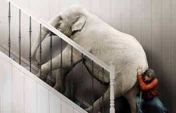 Elephant on the stairs