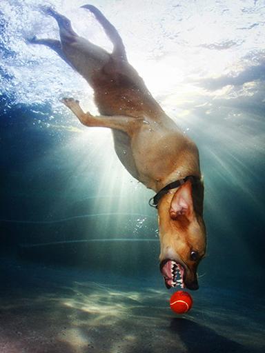 Dogs-Underwater-011