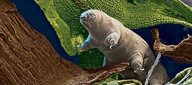GR_tardigrade