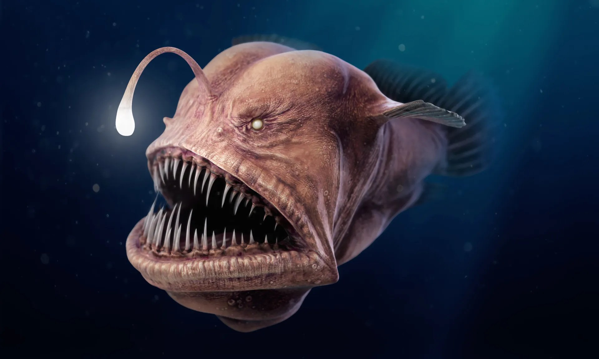What are the scariest animals on earth heads up by boys for Angler fish pet