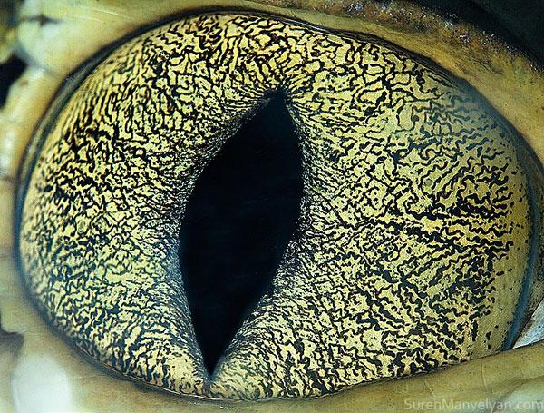 cainman-close-up-of-eye-macro-suren-manvelyan