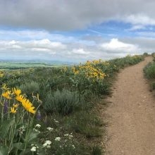 Panoramic image of the Triple Tree Trail in Bozeman, MT