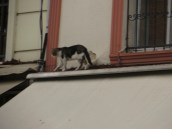 This cats entire existence, as much as we saw, is one story up. Probably subsists on Finches