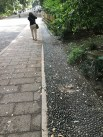 Deliberately rough gutters, Yoyogi Park