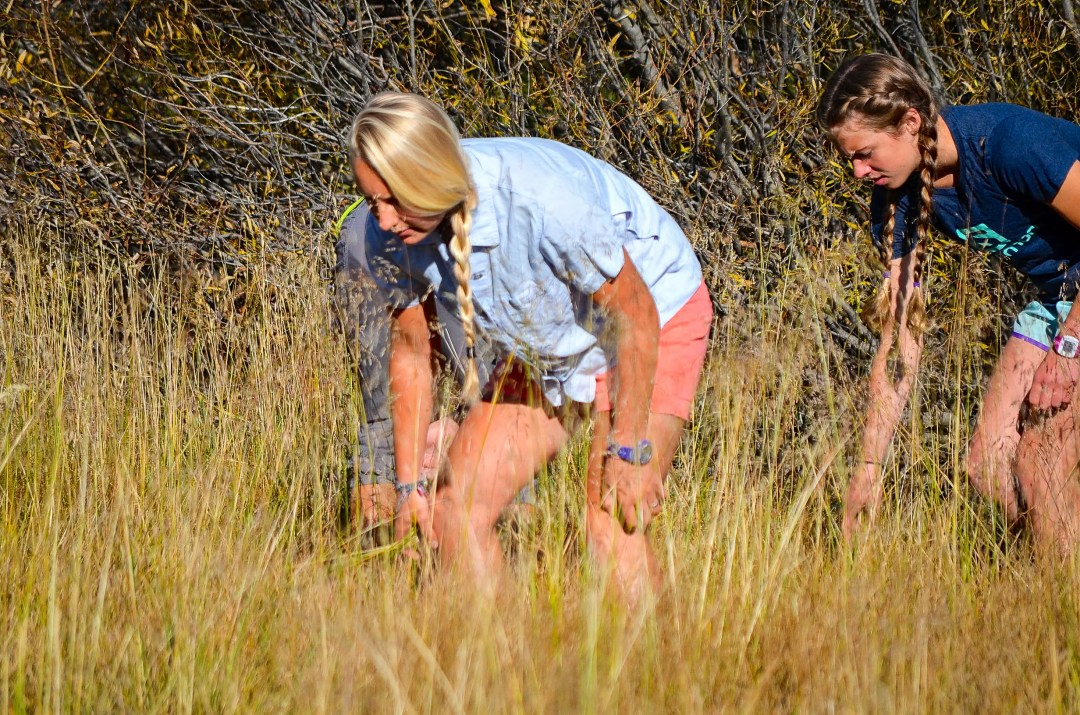Two high school researchers searching for terrestrial insects in a Sierra meadow.