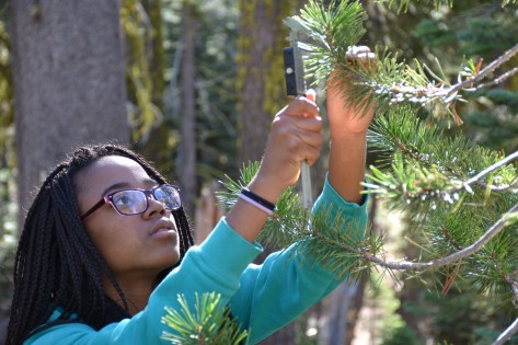 A high school student from Quarry Lane measuring trees as part of her research project on tree growth.