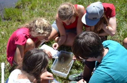 The girls taking count of the aquatic macroinvertebrates at Webber Lake.