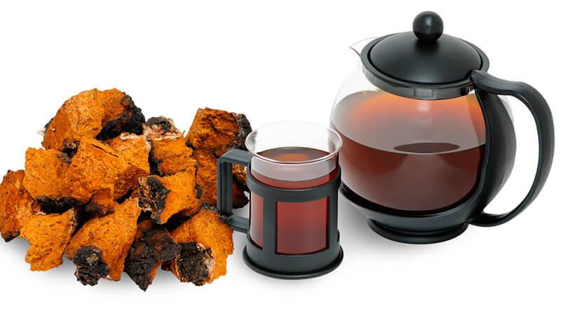 чай из чаги полезные свойства и противопоказания