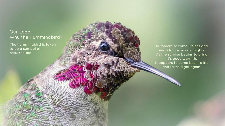 12-Hummingbird