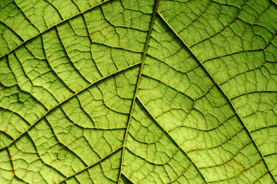 cracked green leaf