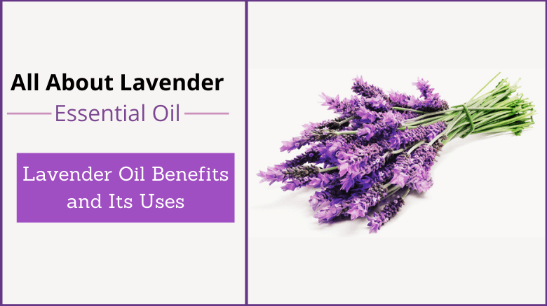 Lavender Oil Benefits and Its Uses