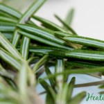 Rosemary: The Power Mint with Many Health Benefits