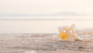 Beach with Frangipani Spa Flowers