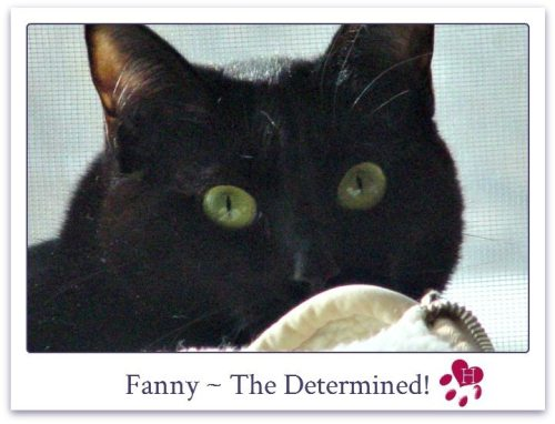 Fanny_website_photo