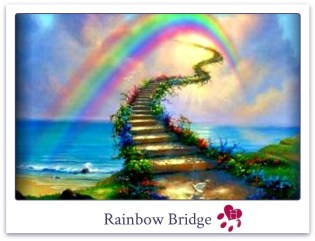HHS_RainbowBridge