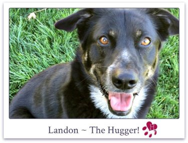 Landon_website_photo