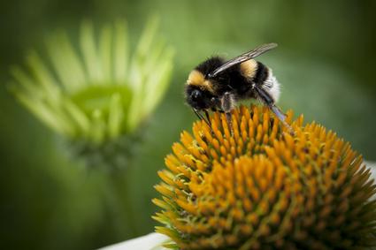 antihistamine bee pollen